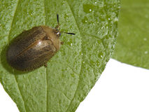 Bug On A Plant Stock Image