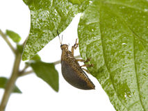 Bug On A Plant Stock Images