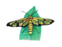 Bug painting Stock Photo