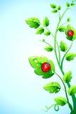 Bug on plant Stock Photos