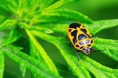 Bug on the plant. The bug on the plant with a green background Royalty Free Stock Image