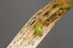 Bug Stock Image