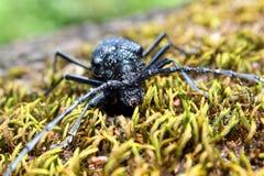 The Bug Pruner Royalty Free Stock Photos