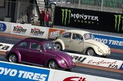 Bug racing Royalty Free Stock Image