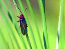 Bug resting on a grass, macro shot Stock Images