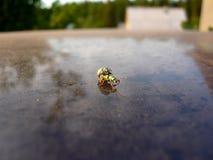 Bug& x27; s-liv! royaltyfri bild