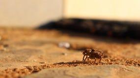 Bug& x27; s życie obrazy stock