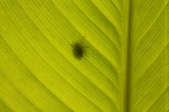 Bug shadow silhouette on green leaf Stock Image