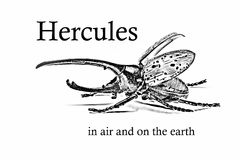 Bug and signature Hercules in air and on the earth. Beetle and signature Hercules in air and on the earth Vector Illustration