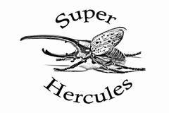 Bug and signature Super Hercules. Pencil drawing of a beetle and signature Super Hercules Royalty Free Stock Photo