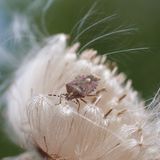 Bug sits on a white flower Royalty Free Stock Image