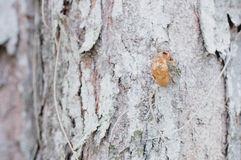 Bug skin on tree and wood background Royalty Free Stock Photos