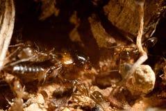 bug slagsmål Arkivfoto