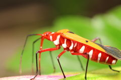 Bug and small insect Stock Images