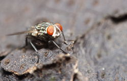 Bug and small insect Royalty Free Stock Images