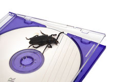 Bug in software. Metaphor concept Stock Images