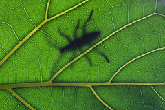Bug stay on leaf Stock Images