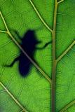 Bug stay on leaf Stock Photos