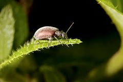 A bug in summer Stock Photography