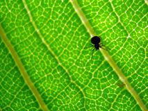 Bug Textures. A tiny bug on a small leaf in macro mode Stock Photos