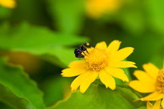 A bug on top of flowers Royalty Free Stock Photos