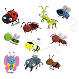 Bug vector set Royalty Free Stock Images