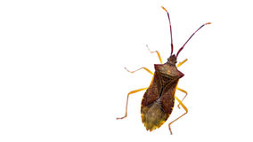 Bug. A bug in a white sheet stock photography