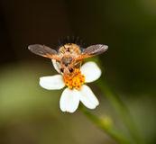 Bug on white and yellow flower Royalty Free Stock Photos
