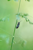 Bug on wild grass Stock Photography