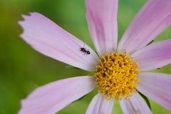 Bug world Royalty Free Stock Photo
