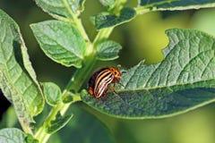 Bug wrecker Stock Photography