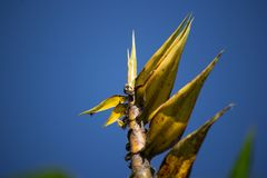 Bug and Yellow Bamboo tree Royalty Free Stock Photos