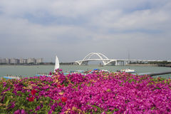 Buganvília na flor completa na baía wuyuan Foto de Stock Royalty Free