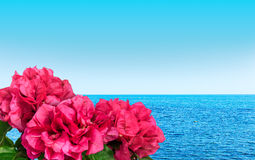 Buganvília pelo mar Foto de Stock Royalty Free