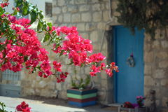 Buganvília vermelha perto da porta azul imagens de stock