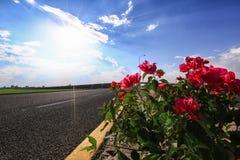 Buganvilia am Rand der ein Sonnenbad nehmenden Straße Stockfotografie