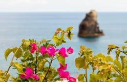 Buganvilias et îlot Images libres de droits