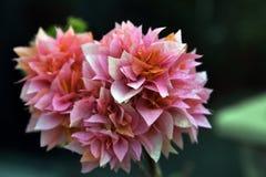 Buganvilla rosada Imagen de archivo libre de regalías