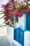 Buganvillea nell'isola di Santorini Fotografia Stock
