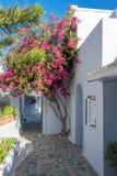 Buganvillea porpora davanti ad una casa greca bianca tipica dentro Fotografie Stock