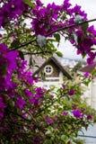 Buganvillea rosa con la Camera adorabile su fondo fotografia stock libera da diritti