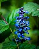Bugel in bloem royalty-vrije stock foto's