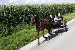 Buggy de Amish foto de stock