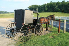 Buggy de Amish Foto de Stock