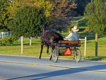 Buggy de Amish foto de stock royalty free