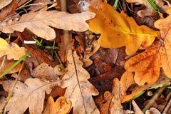 Bugia colorata delle foglie sulla terra Immagine Stock Libera da Diritti