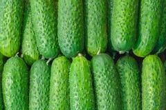 Bugia dei cetrioli in una fila come fondo Immagini Stock