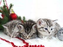Bugia dei gattini sotto l'albero di Natale Fotografia Stock Libera da Diritti