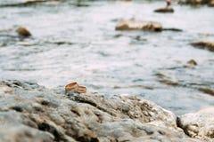 Bugia delle fedi nuziali sulla roccia Immagini Stock Libere da Diritti