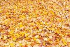Bugia delle foglie caduta giallo sulla terra Fotografia Stock